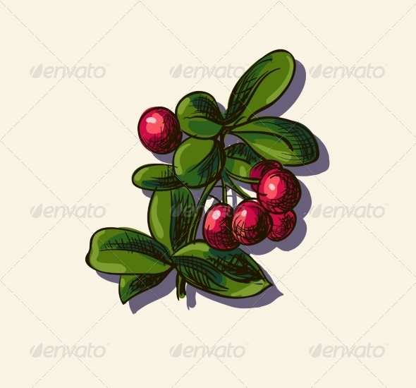 Illustration of Cowberry - Food Objects