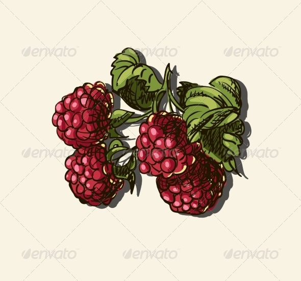 Illustration of Raspberries - Food Objects