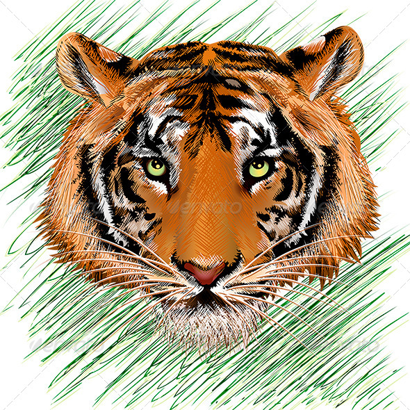 Tiger Sketch - Animals Characters