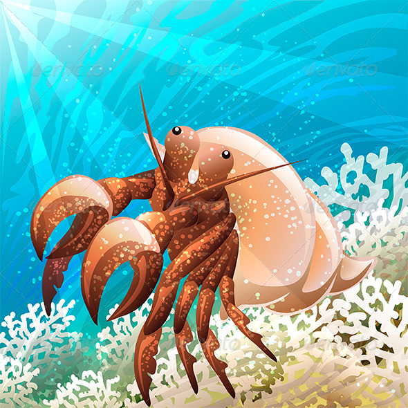 Hermit Crab - Animals Characters