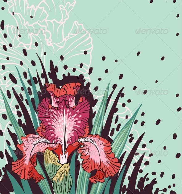 Iris Flower - Flowers & Plants Nature
