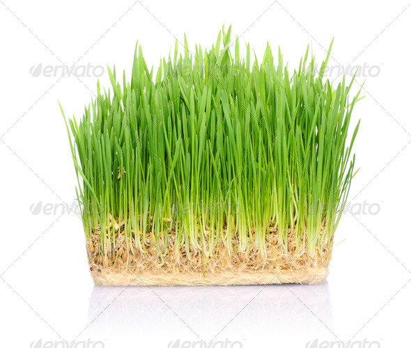 Grass in soil - Stock Photo - Images