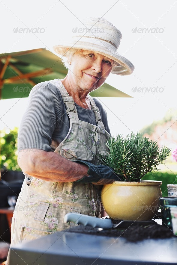 Happy senior female gardener potting new young plant - Stock Photo - Images