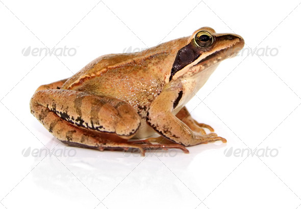 Frog - Stock Photo - Images