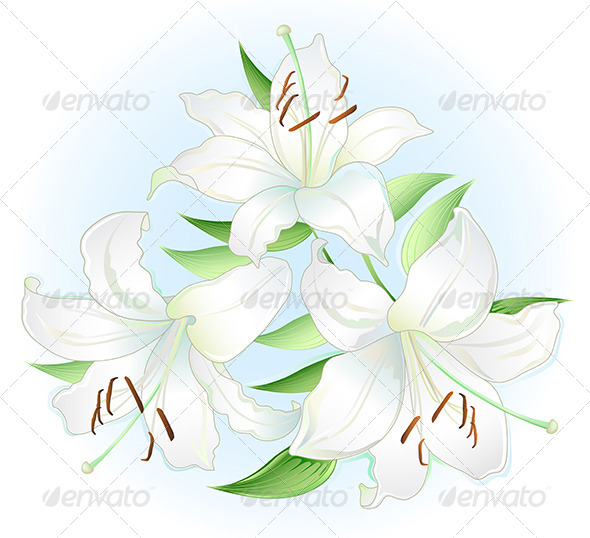 White Lilly  - Flowers & Plants Nature