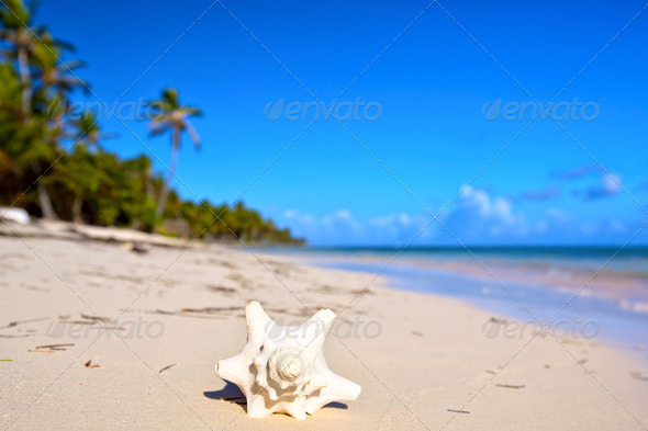 Shell on the beach - Stock Photo - Images