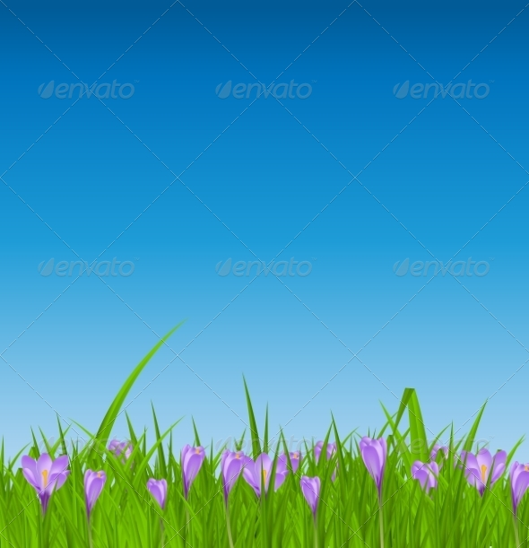 Crocuses Nature Background - Landscapes Nature