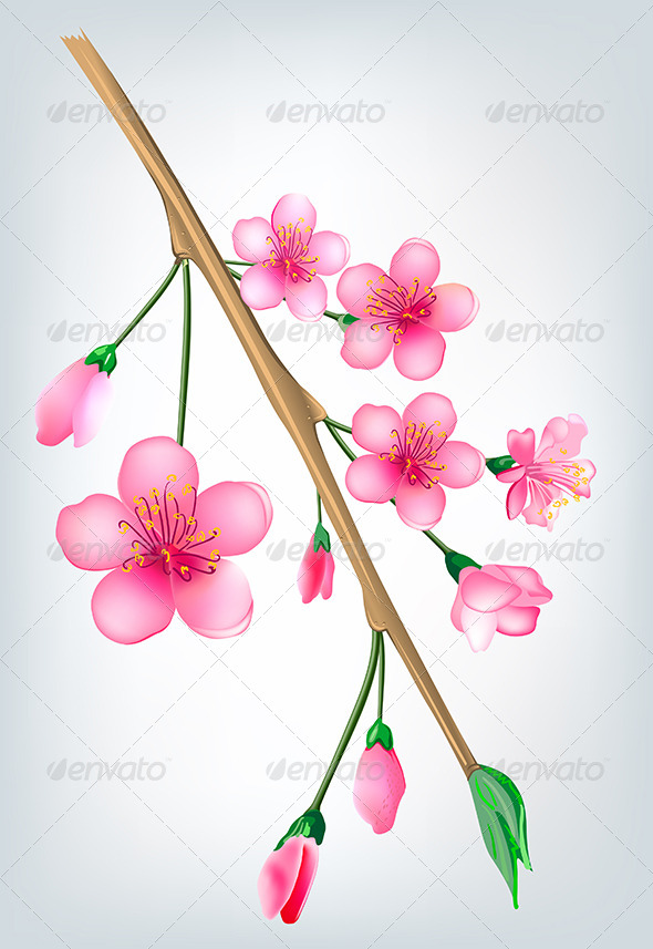 Sakura Blossom Branch - Flowers & Plants Nature