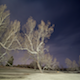 Ghostly Trees Night - VideoHive Item for Sale