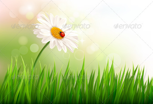 Spring Background with a Daisy and a Ladybug - Flowers & Plants Nature