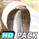 Cobra Snake India (5-Pack) - VideoHive Item for Sale