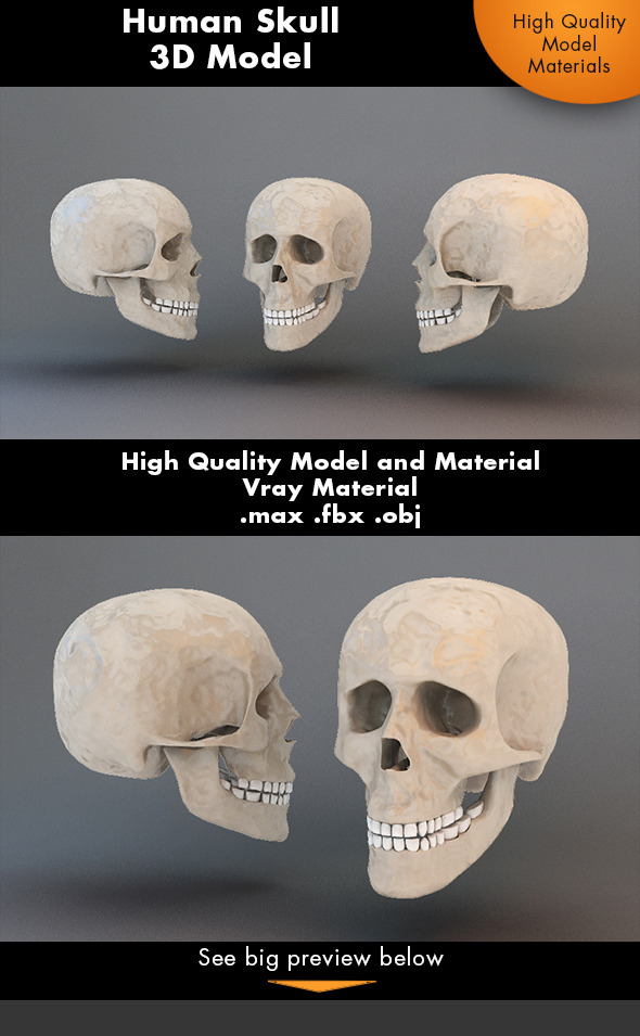 Human Skull 3d Model - 3DOcean Item for Sale