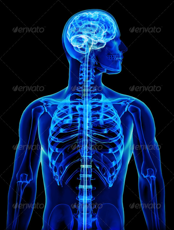 X-ray with brain and spinal cord concept - Stock Photo - Images