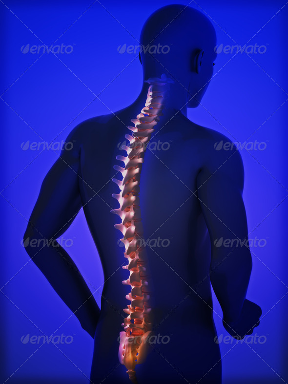 Human spine - Stock Photo - Images