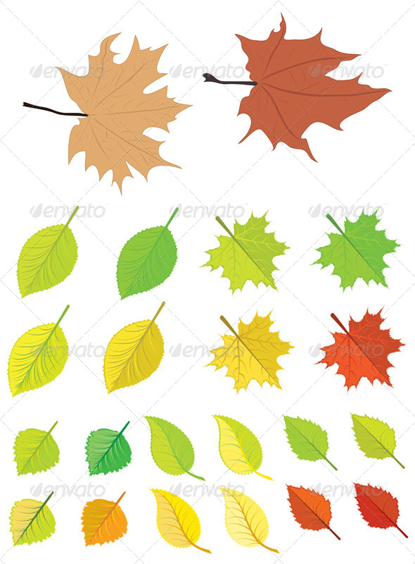 Colorful Autumn Leaves - Seasons Nature