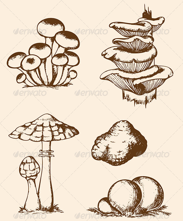 Vintage Hand Drawn Forest Mushrooms - Food Objects