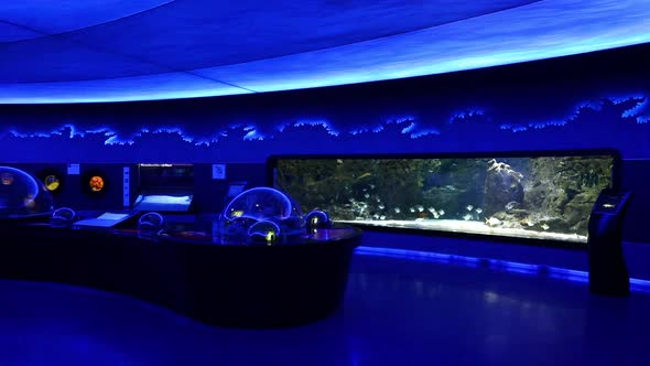 VideoHive Aquarium With Fish 20402422