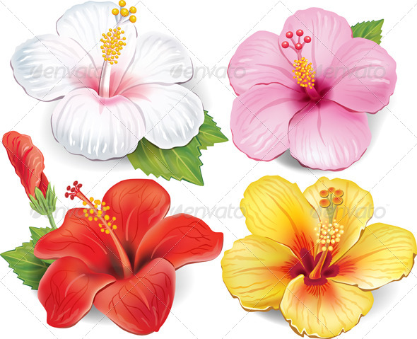 Set of Hibiscus - Flowers & Plants Nature