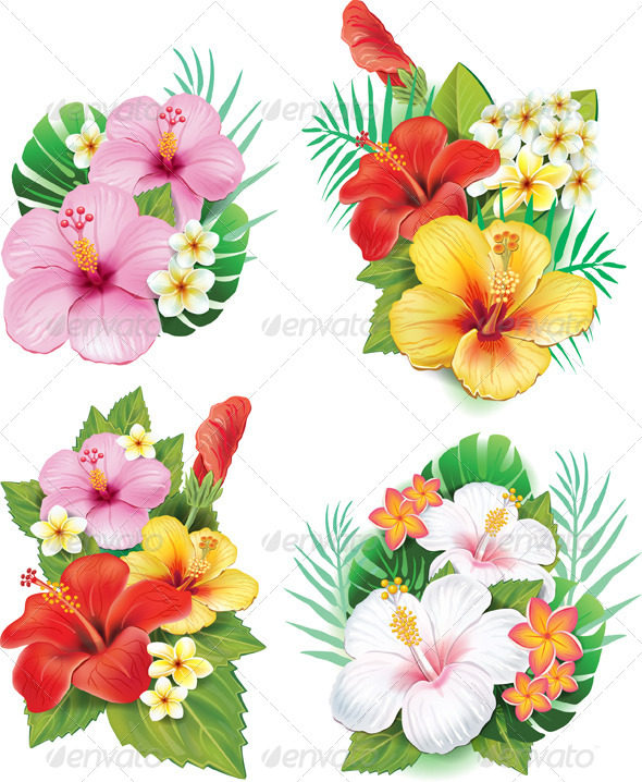 Arrangement from Hibiscus Flowers - Flowers & Plants Nature