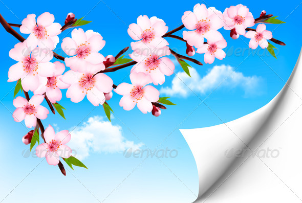 Spring Background of a Blossoming Tree Branch - Flowers & Plants Nature