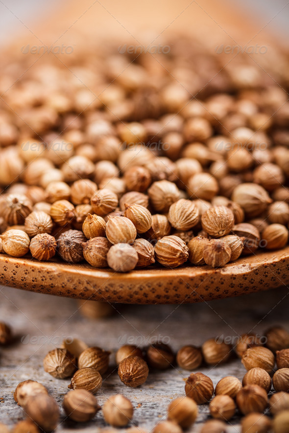 Coriander seeds - Stock Photo - Images