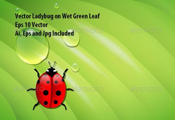 Ladybug on Green Leaf - Seasons Nature