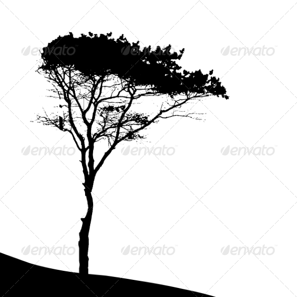 Tree Silhouette Isolated on White Backgorund - Seasons Nature