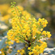 Yellow Flowers - VideoHive Item for Sale