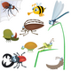 Insect set #2 - GraphicRiver Item for Sale