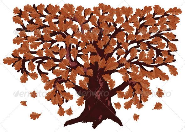Autumn Oak Tree - Seasons Nature
