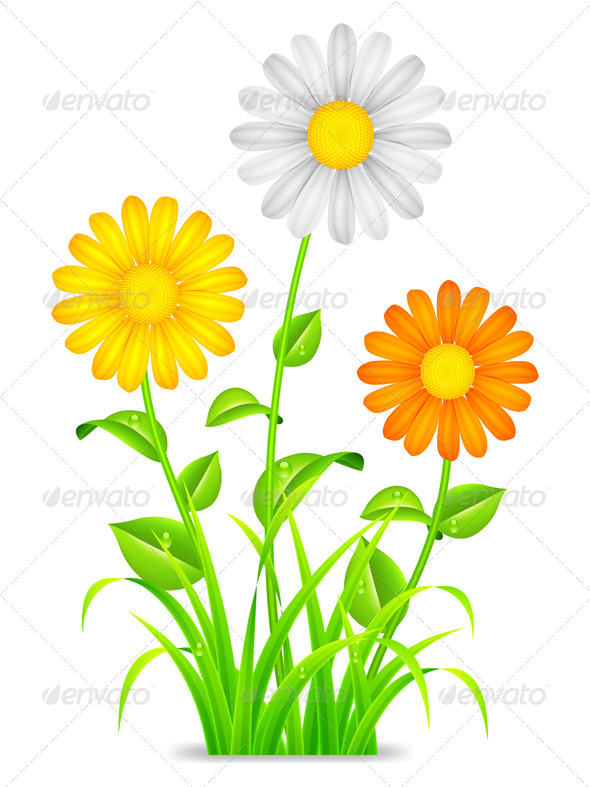 Daisy Chamomile Flowers - Flowers & Plants Nature