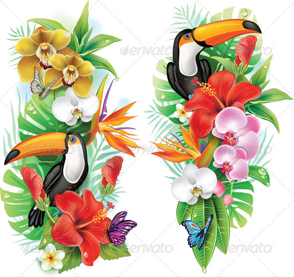 Tropical Flowers, Toucan and Butterflies - Flowers & Plants Nature
