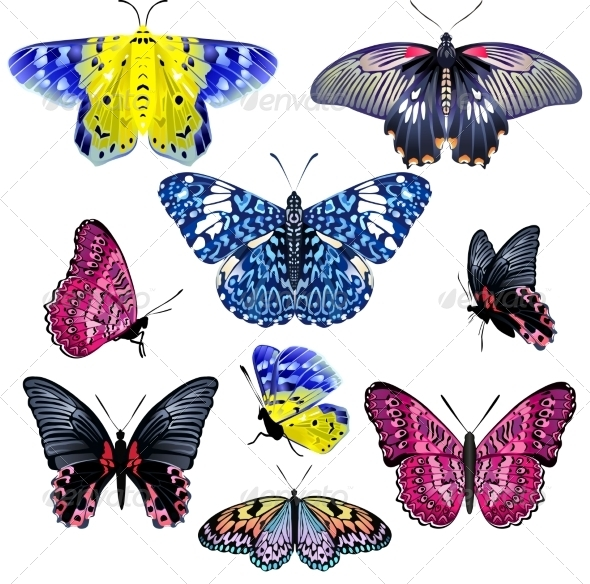Set of Colorful Realistic Isolated Butterflies - Flowers & Plants Nature