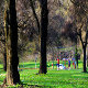 Playing in the Park - VideoHive Item for Sale