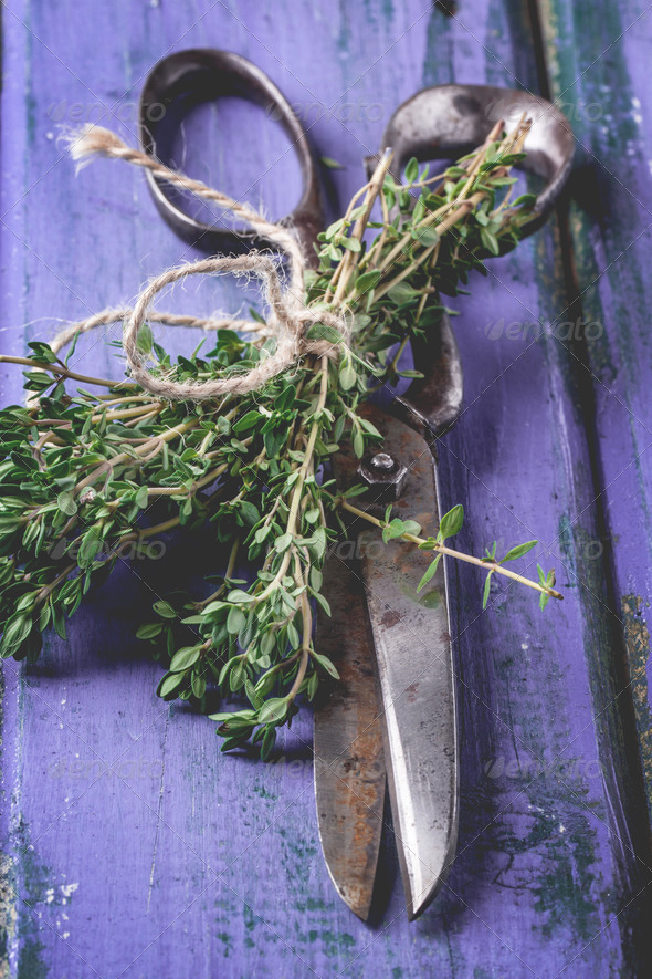 Thyme and scissors on violet wooden table - Stock Photo - Images
