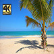 Coconut Tree On The Beach - VideoHive Item for Sale