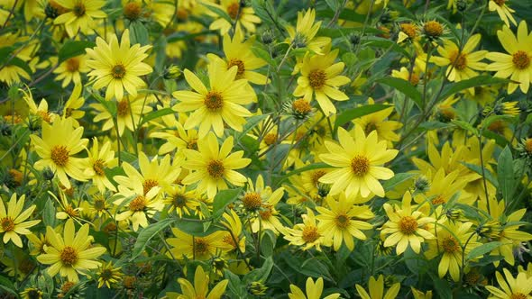 Bright Yellow Flowers In Breeze By Rockfordmedia Videohive