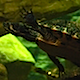 Terrapins 1 - VideoHive Item for Sale