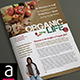 4 Page A4 and US Letter Organic Newsletter - GraphicRiver Item for Sale