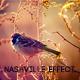 Nashville Action Effect - GraphicRiver Item for Sale
