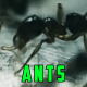 Ants - VideoHive Item for Sale