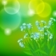 Card with Forget Me Not Flowers in Sunlight - GraphicRiver Item for Sale