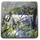 Spring Forest Dam 1 - VideoHive Item for Sale