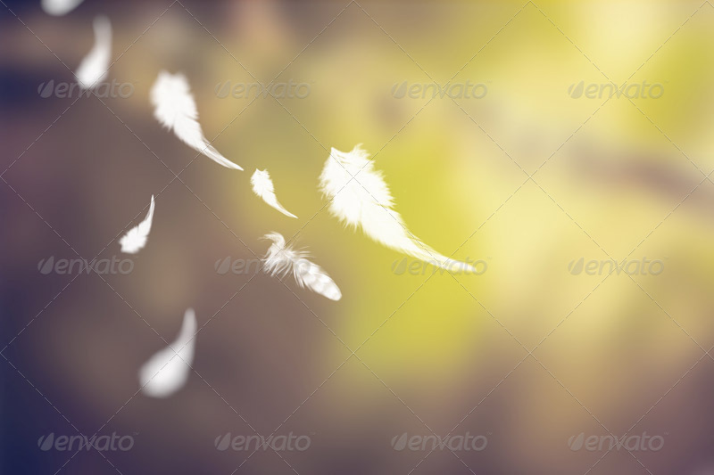 background with falling feathers by wutip graphicriver