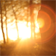 Forest in the Sunset 5 - VideoHive Item for Sale