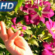 Girl and Tropical Flowers - VideoHive Item for Sale