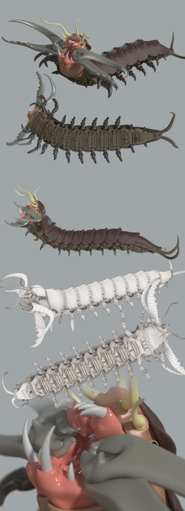 Bobbit worm - 3DOcean Item for Sale