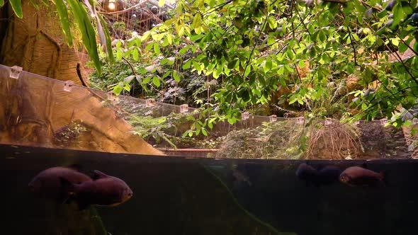 VideoHive Nature Fish 1 20402416