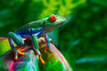 Red Eyed Tree Frog - PhotoDune Item for Sale