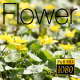The Flower Field 7 - VideoHive Item for Sale